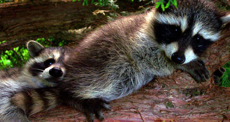 Check for Wild Animals When Cleaning Your House & Yard